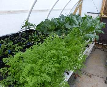 Solexx Greenhouse Garden