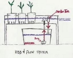 Ebb & Flow Hydroponics