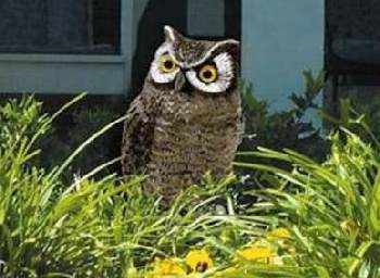 Garden Defense Electronic Owl 8021
