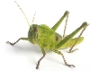 Moderation, Grasshopper!