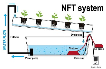Nutrient Film Technique system