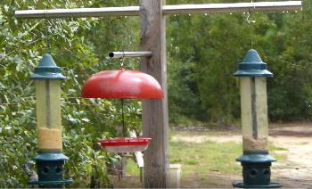 This is our homemade bird-feeding station.