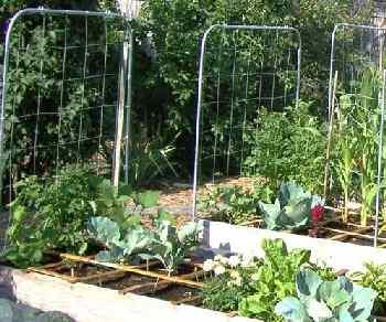 Trellis helps support vining crops.