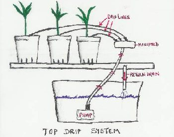Top Drip Bato Bucket system