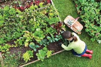 Woman working in a raised-bed vegetable garden.