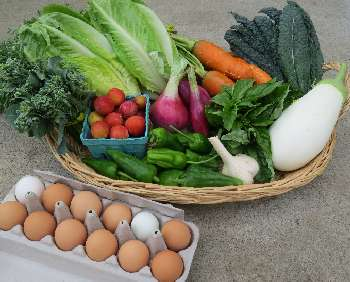 Farm fresh veggies and eggs