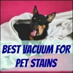 best vacuum for pet stains