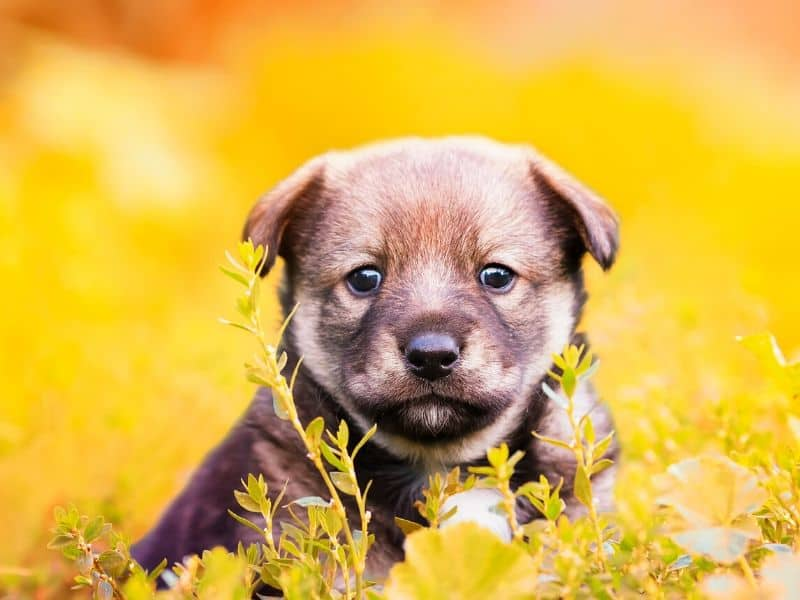 Cute puppy print
