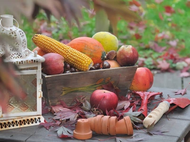 Fall fruits used as table decor