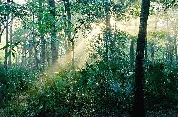 ocala forest